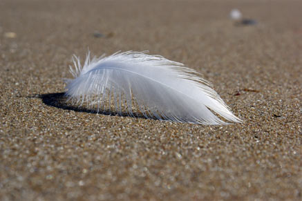 437px_Feder-Sand